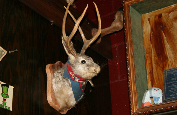 photo of a jackalope